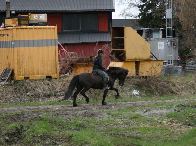 hästarna 585.JPG