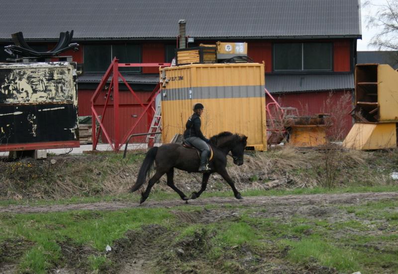 hästarna 583.JPG