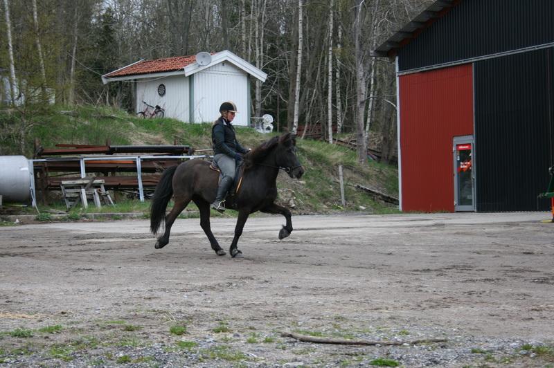 hästarna 575.JPG