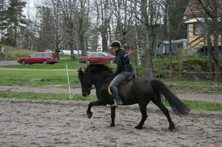 hästarna 510.JPG