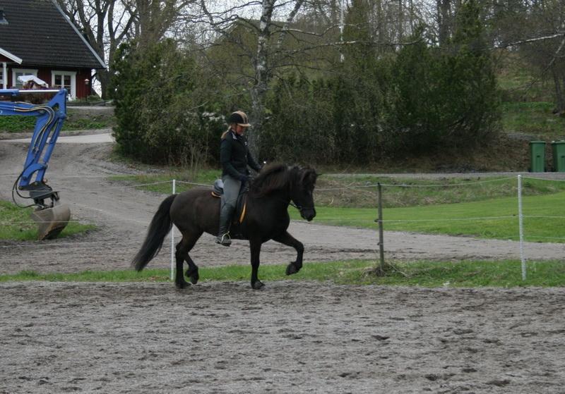 hästarna 418.JPG