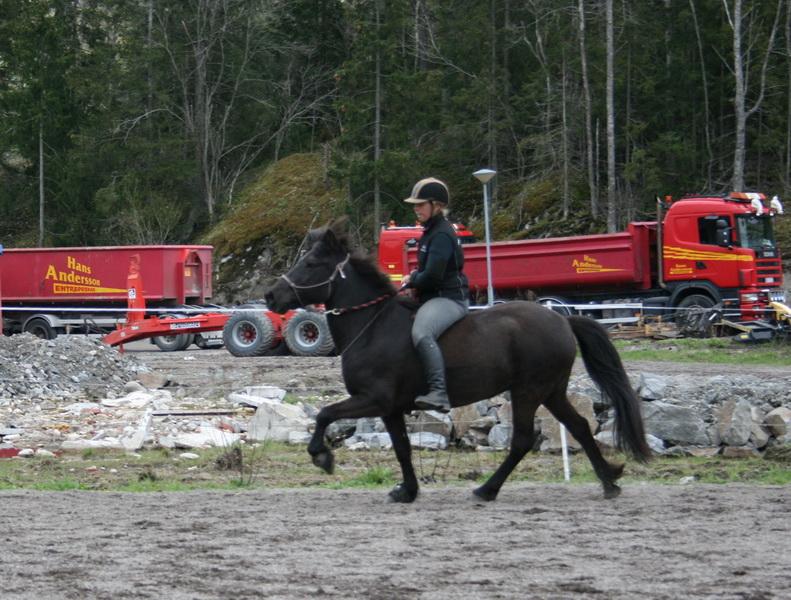 hästarna 399.JPG