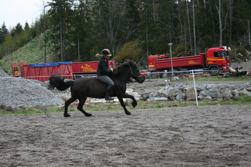 hästarna 377.JPG