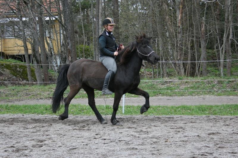 hästarna 361.JPG