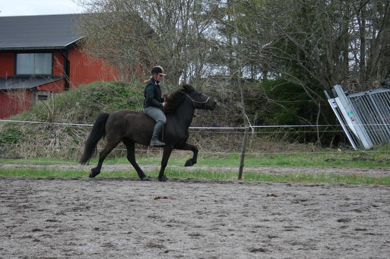 hästarna 336.JPG