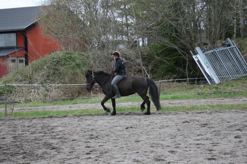 hästarna 292.JPG
