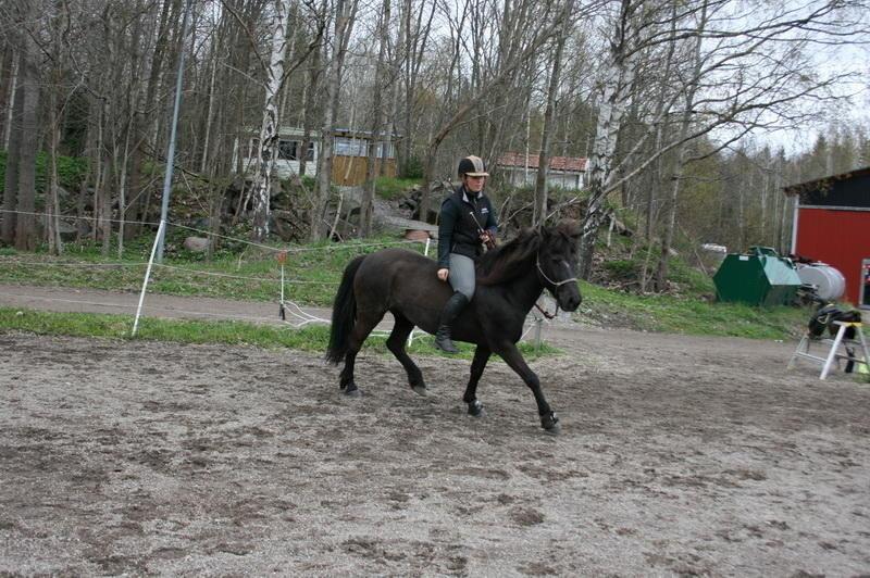 hästarna 271.JPG